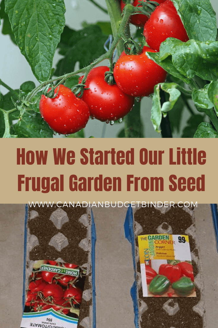 How We Started Our Little Frugal Garden From Seed