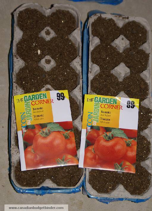 Tomato Seeds Planted In Egg Cartons