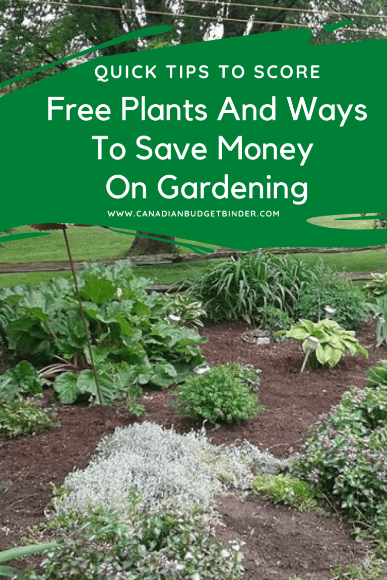 Free Plants And Ways To Save Money On Gardening
