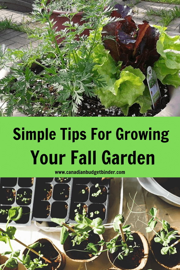 Simple Tips For Growing Your Fall Garden