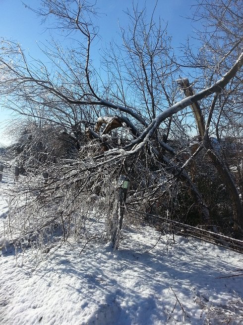 Ontario-Ice-Storm-2013-fallen-tree