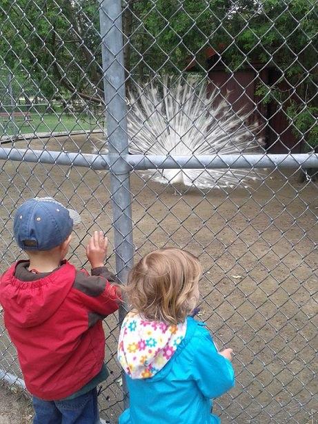 kids free animal farm