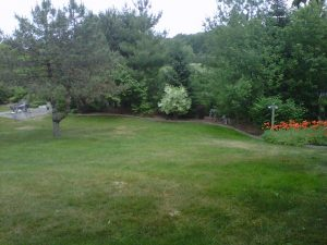 weed free lawn