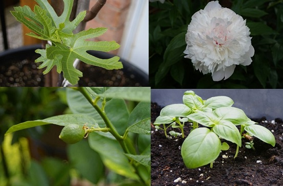 Our Canadian Garden June 2014