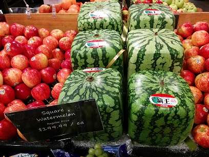 square watermelon vancouver- summer foods