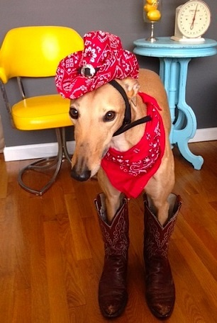 Fugalwoods cowgirl hound