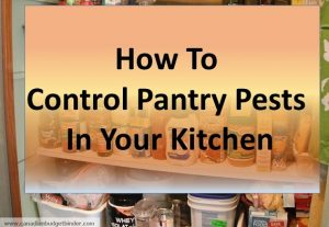 how to control pantry pests in your kitchen