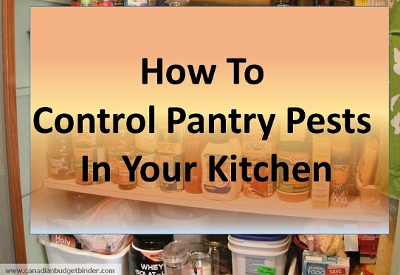 Pet Pantry Dog Food Reviews