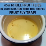 How to kill fruit flies fast with this simple fruit fly trap : The Grocery Game Challenge #4 Sept 28-Oct 4, 2015