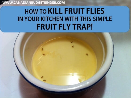 healthy fruit side dishes killing fruit flies