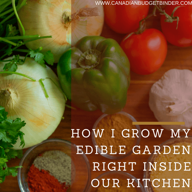 How I Grow My Edible Garden Right inside Our Kitchen: The Grocery Game Challenge 2016 #1 Nov 7-13