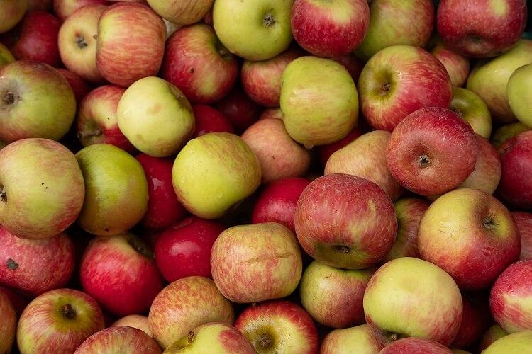 apples for apple pie bars