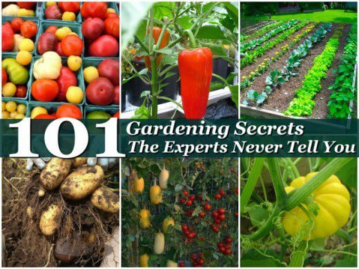 gardening secrets the experts don't tell you about