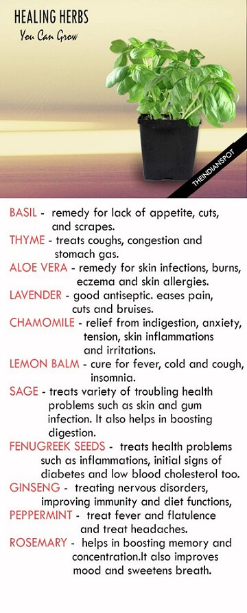 healing herbs you can grow at homehealing herbs you can grow at home