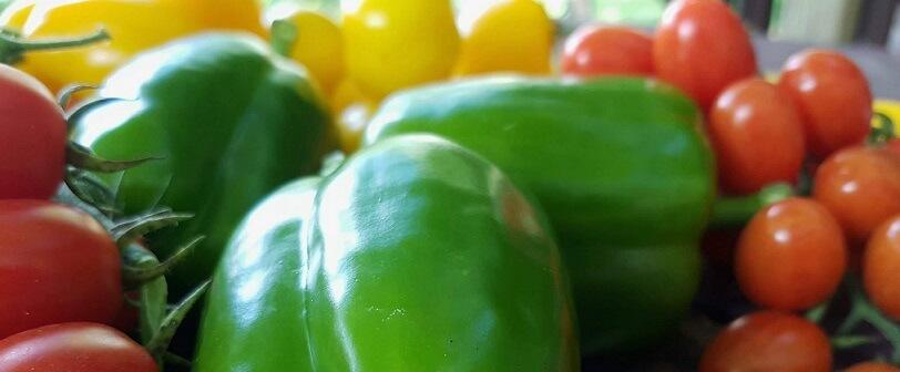 homegrown organic produce Ontariohomegrown organic produce Ontario