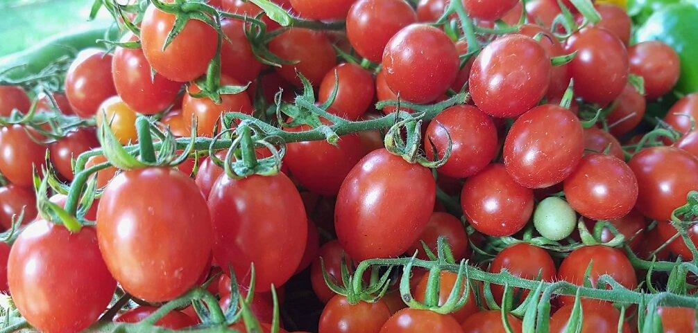 organic cherry tomatoes Ontario 2017