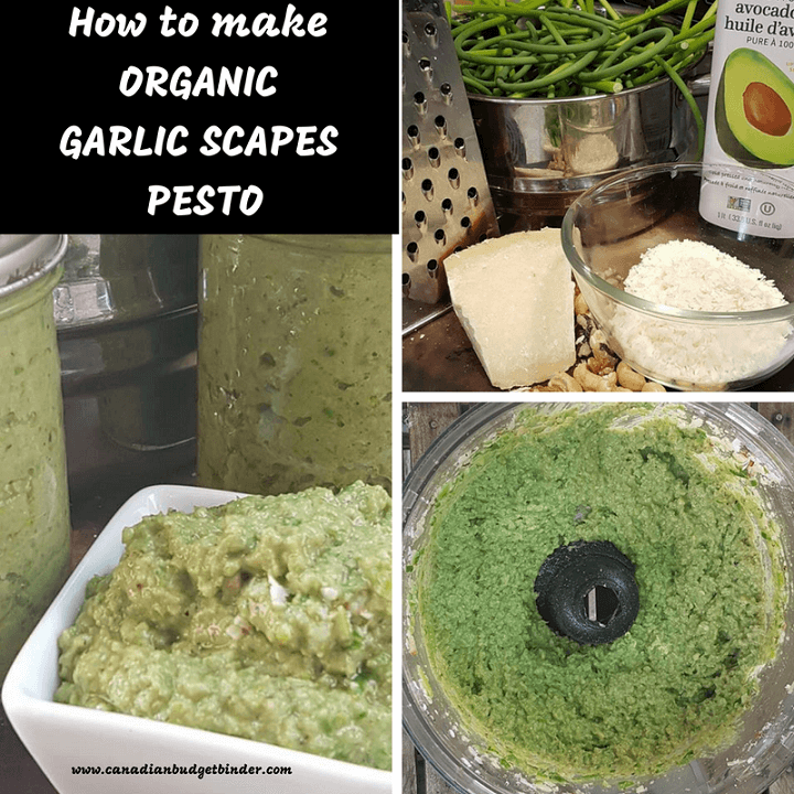 How to make ORGANIC GARLIC SCAPES PESTO-1