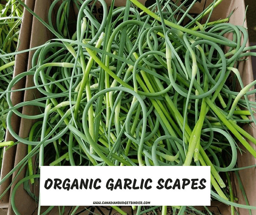 ORGANIC GARLIC SCAPES-1