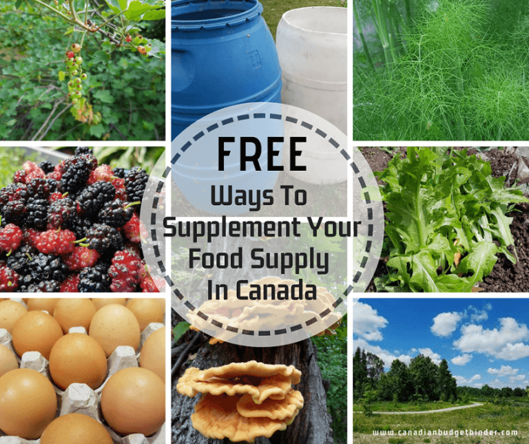 FREE Ways To Supplement Your Food Supply In Canada : The GGC 2018 #3 July 16-22