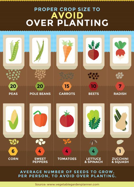 avoid overplanting vegetable garden seeds