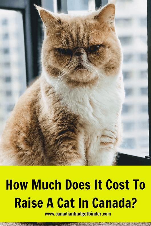 cat expenses