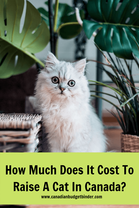 cat ownerships costs