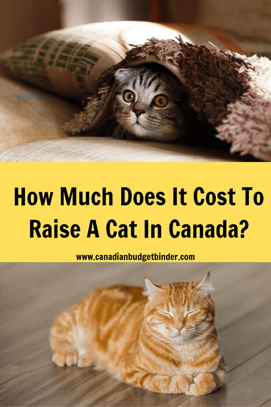 how much does it cost to raise a cat in Canada