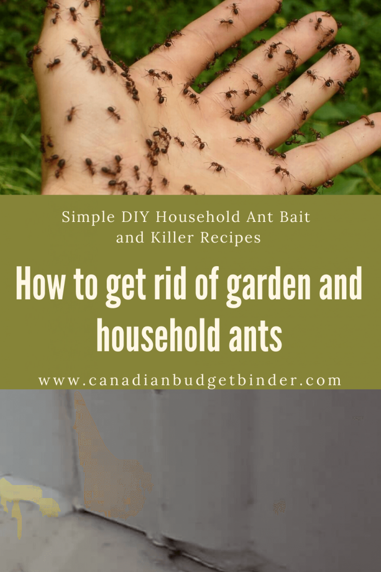 Simple Ways To Rid Of Garden And Household Ants