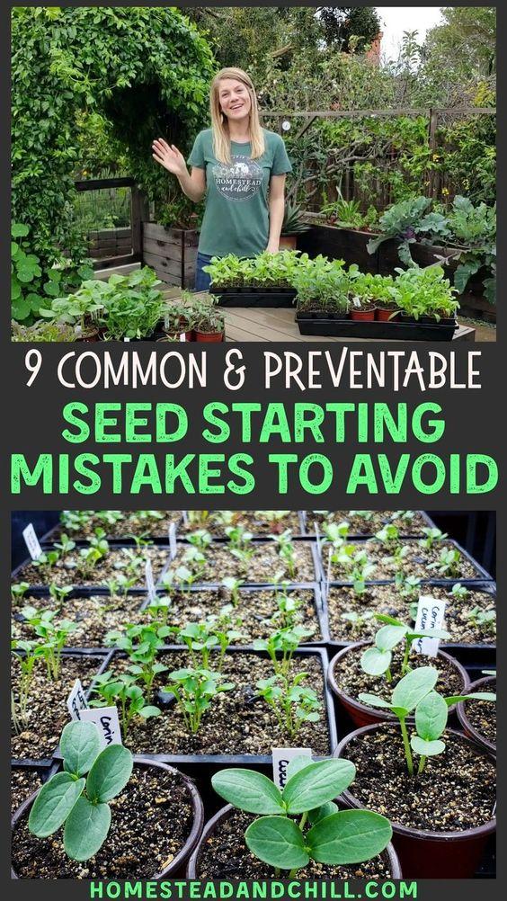 vegetable garden seeds