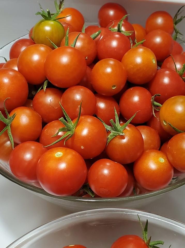Tomate cereja italiano