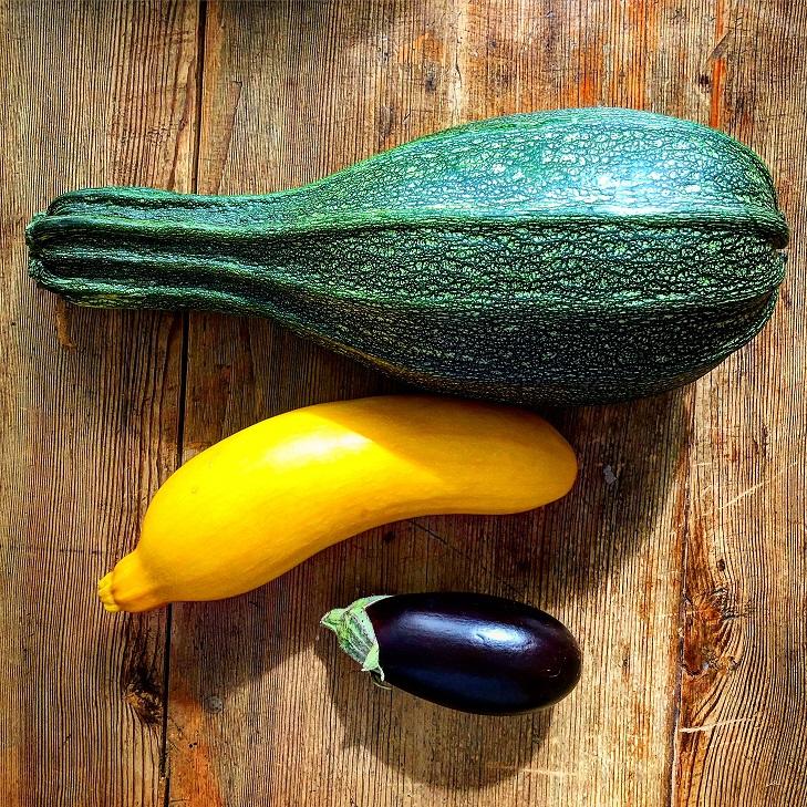Ontario zucchini