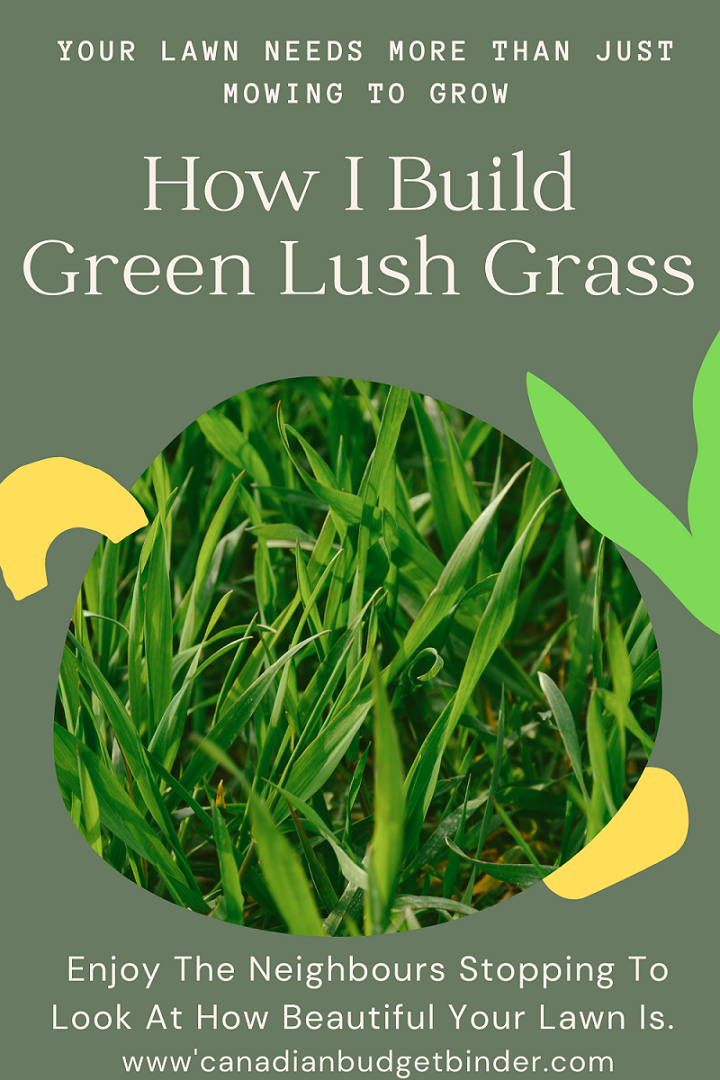 How To Build Green Grass On Your Property