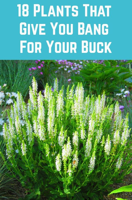 18 Plants That Gives You Bang For Their Buck