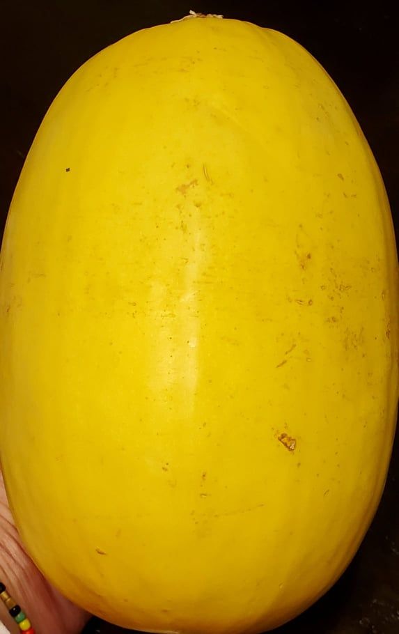 Spaghetti Squash raw before baking it in the oven.